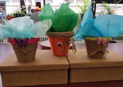Trois plantes cadeaux sur une table devant une fenêtre