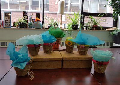 Sept plantes en cadeau